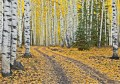 Road Through the Aspens Horizontal print