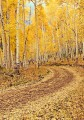 Road through the Autumn Colors print