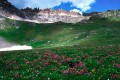 Ouray's Govenors Basin Wildflowers 3 print