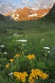 Maroon Bells Wildflowers print