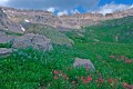 Ouray's Govenors Basin Wildflowers 2 print