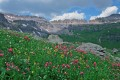 Ouray's Govenors Basin Wildflowers 1 print