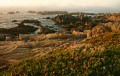 Pacific Grove Ice Plant1 print