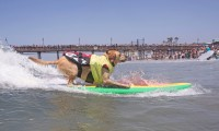Imperial Beach Surf Dogs 2018