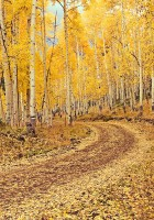 photo, fall colors, Lake City, Colorado, photography, fine art prints, Mike Barton