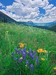 Crested Butte, Wildflower Capitol of Colorado, mountain, wildflowers, photography, fine art prints, Mike Barton