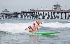 Imperial Beach Surf Dogs 2017
