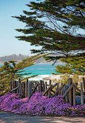 wooden pickets, cartoonish, Carmel-By-The-Sea, Mike Barton