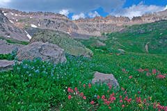 Photo, Governors Basin, Ouray, Colorado, wildflowers, photography, fine art prints, Mike Barton