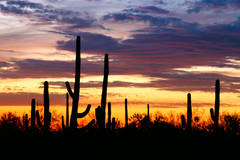 Twilight, Saguaro National Park, Tucson, Arizona, photography, fine art prints, Mike Barton
