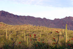 Sunrise, Saguaro National Park, Tucson, Arizona, photography, fine art prints, Mike Barton