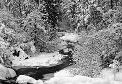 Snow, creek, colorado, photography, fine art prints, Mike Barton, Front Range