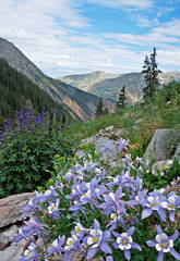 Stoney Pass, photo, Silverton, wildflowers, Colorado,  photography, fine art prints, Mike Barton