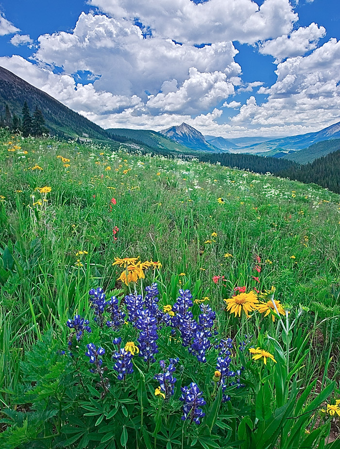 Crested Butte, Wildflower Capitol of Colorado, mountain, wildflowers, photography, fine art prints, Mike Barton, photo
