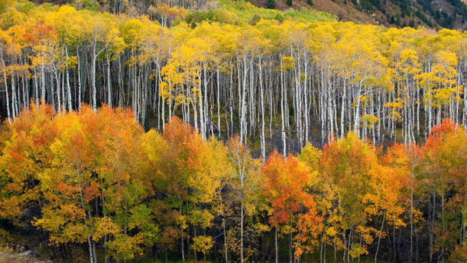 photo, McClure Pass, Colorado, aspens, autumn, photography, fine art prints, Mike Barton, photo