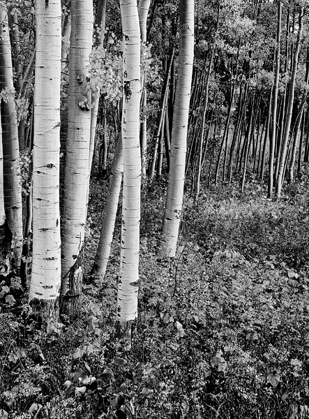 photo, Aspen, Colorado, Independence Pass, fine art prints, Mike Barton