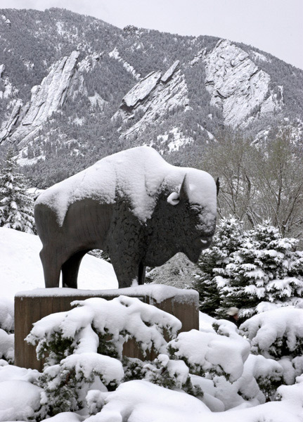 CU buffalo, CU mascot, flatirons, university, Colorado boulder, campus, spring snowstorm, mike barton, photo