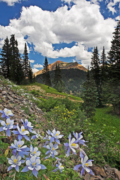 columbine, Ouray, photograph, wildflowers, Colorado, photography, fine art prints, Mike Barton, photo