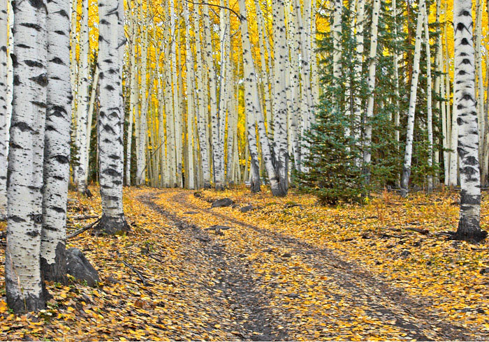 photo, fall colors, San Juan Mountains, Ridgeway, Colorado, photography, fine art prints, Mike Barton, photo