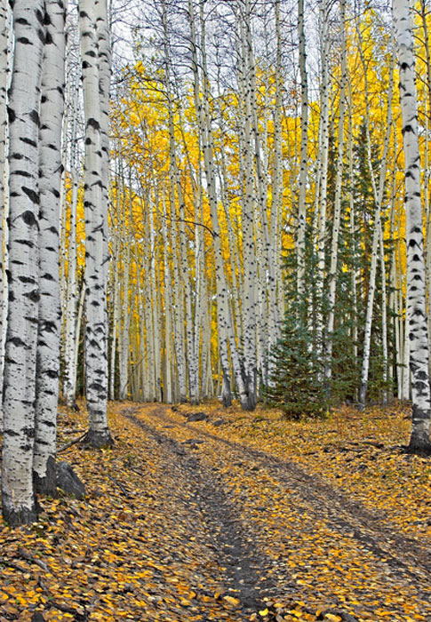 photo, fall colors, San Juan Mountains, Ridgeway, Colorado, photography, fine art prints, Mike Barton
