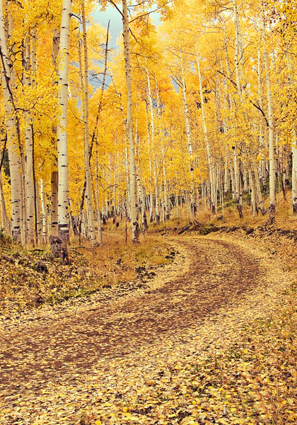 This photo was taken at the peak of fall colors near Lake City, Colorado. Just when I arrived at this location it began to rain...