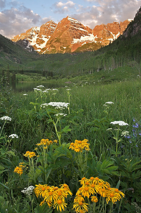 Maroon Bells, Aspen, Colorado, wildflower, summer, sunrise, photography, fine art prints, Mike Barton, photo