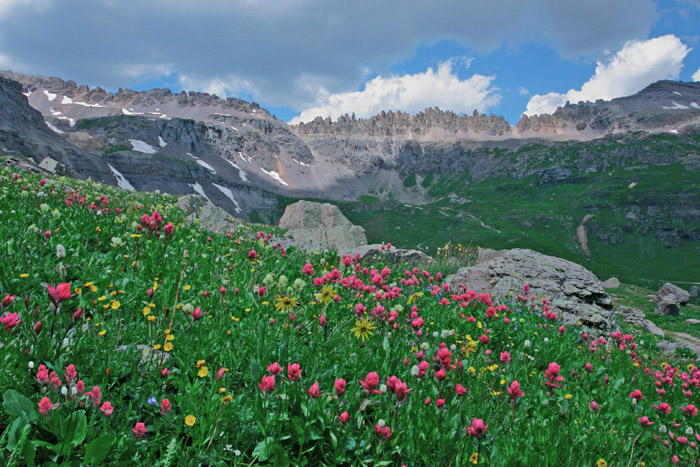 Photo, Governors Basin, Ouray, Colorado, wildflowers, photography, fine art prints, Mike Barton, photo