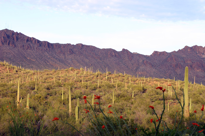 Sunrise, Saguaro National Park, Tucson, Arizona, photography, fine art prints, Mike Barton, photo