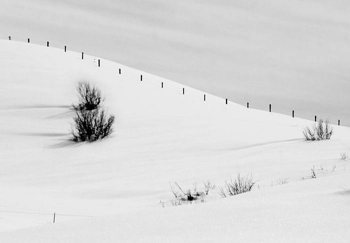 Steamboat, colorado, fence, winter, Mike Barton, photo