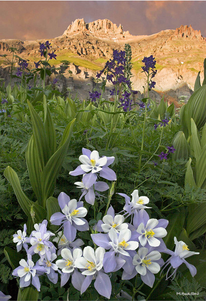 Twin Falls, Yankee Boy Basin, Ouray, colorado, columbine, wildflowers, photography, fine art prints, Mike Barton, photo