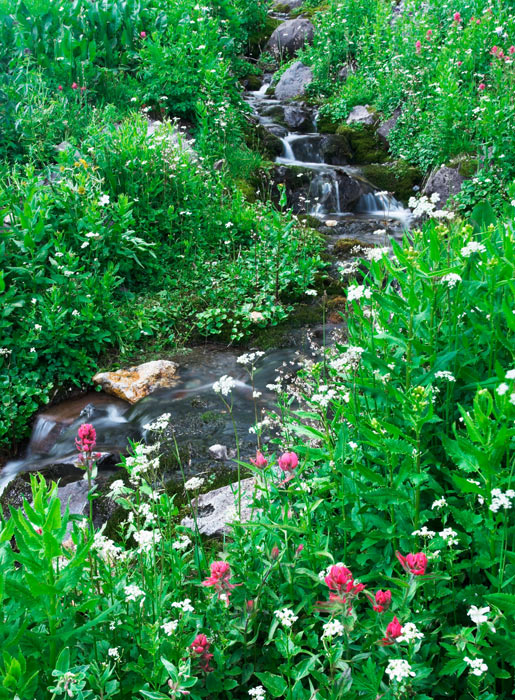 Ouray, photograph, stream, wildflowers, Colorado, photography, fine art prints, Mike Barton, photo