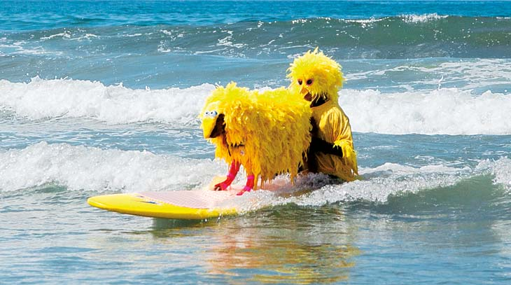 Sur-fur Ricochet, or Ricki for short, took first place at the 2013 Surf Dog Surf-A-Thon on Dog Beach. Ricki has helped raise...